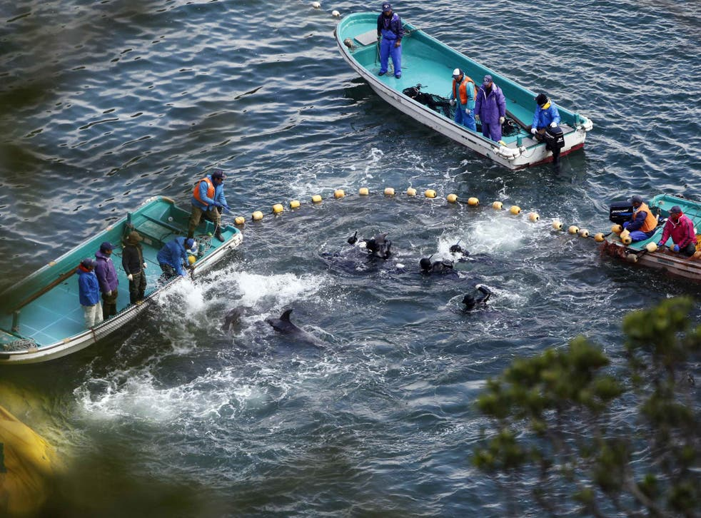 Fishermen in wetsuits hunt dolphins at a cove in Taiji earlier this year