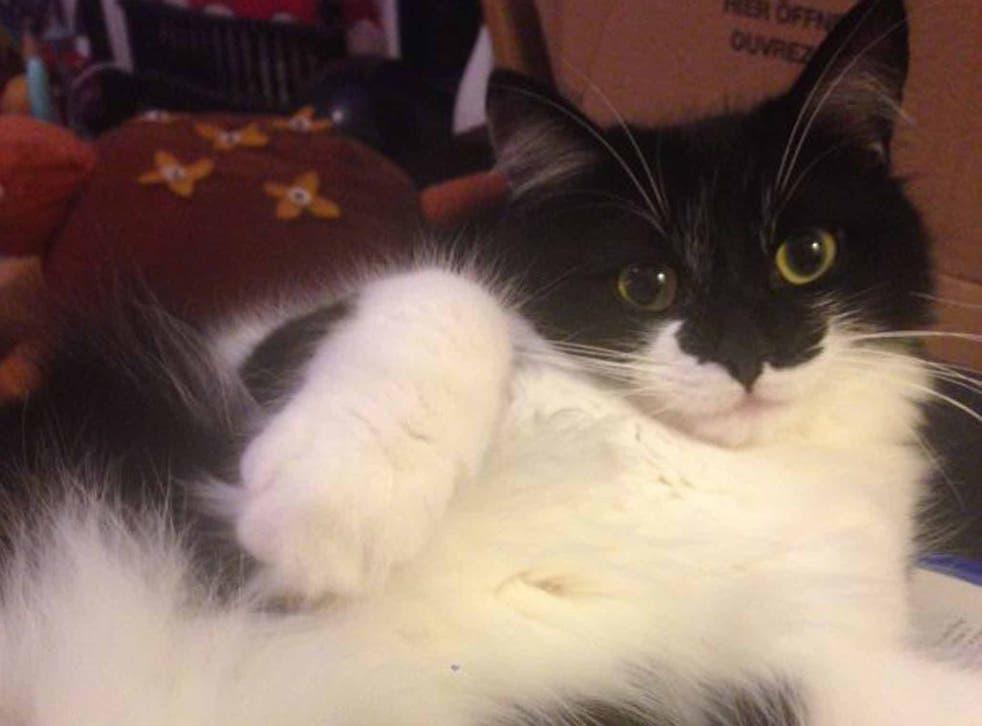 Home body: Badger stays safe indoors