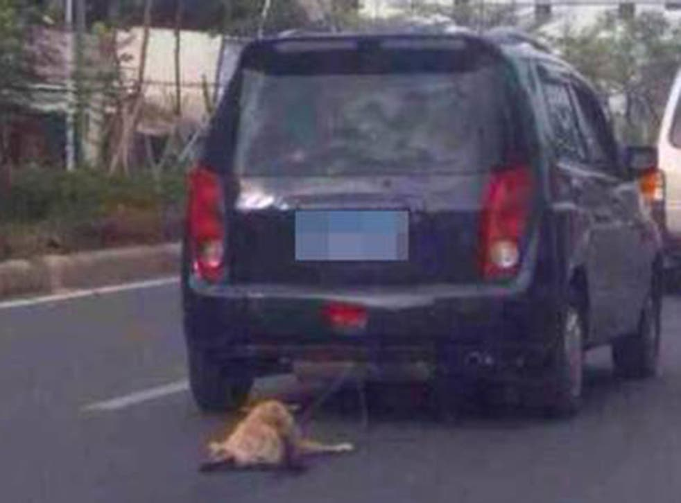 Images were uploaded onto Weibo of the dog being dragged by the car in Guangdong province