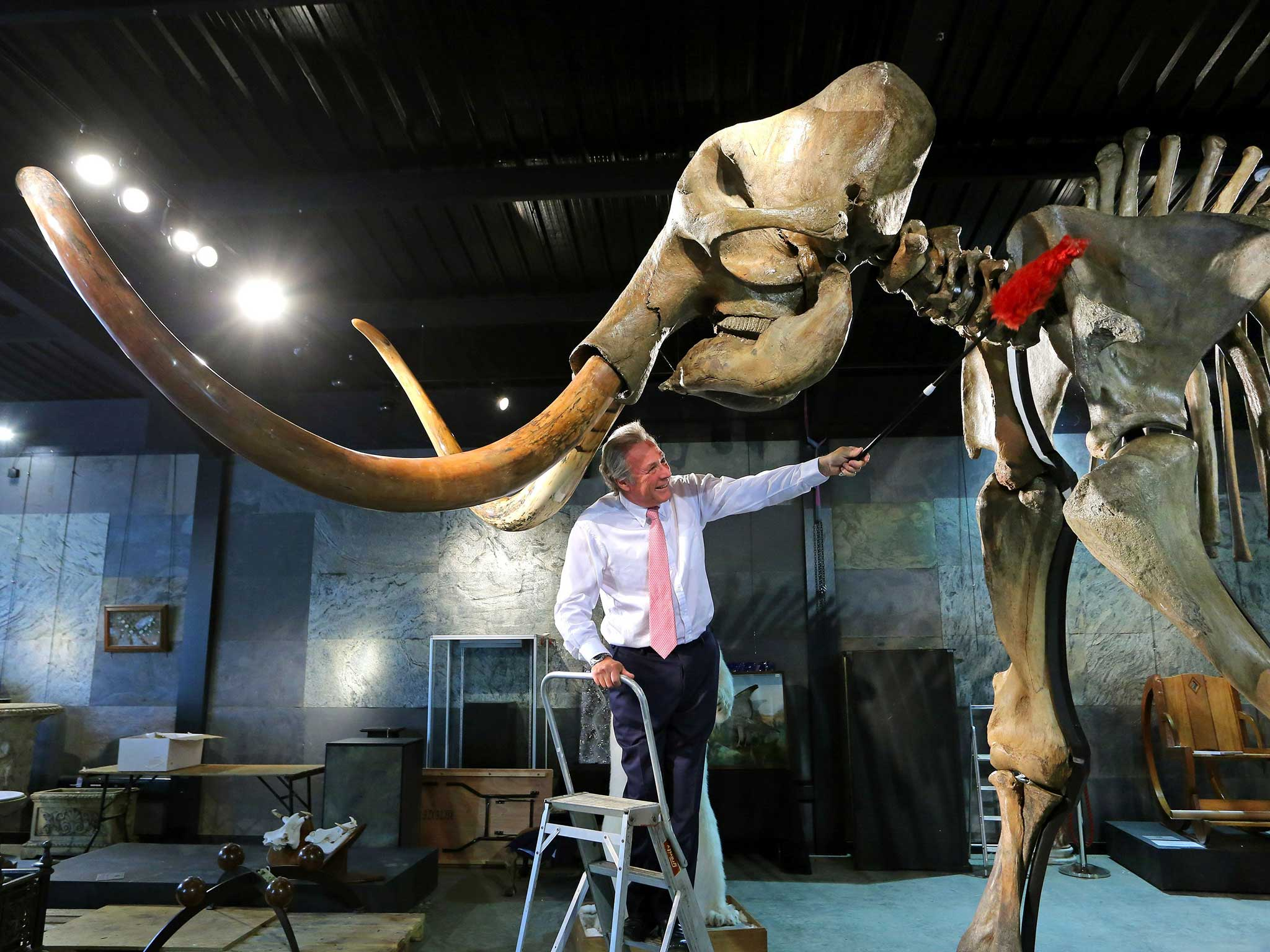 For sale: One woolly mammoth skeleton, intact | The Independent