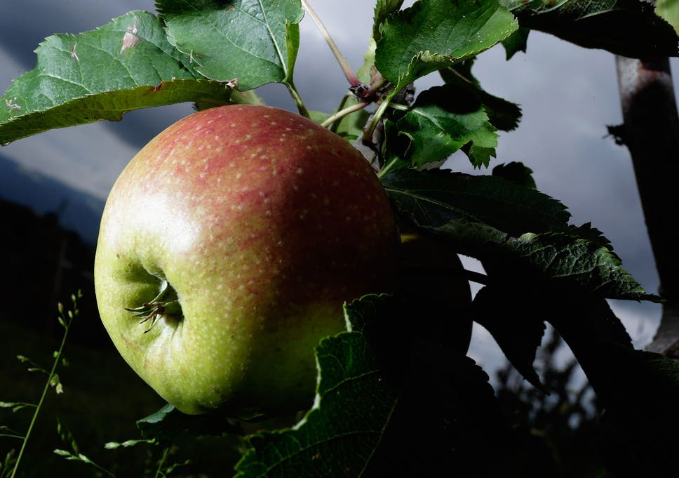 Apples sex
