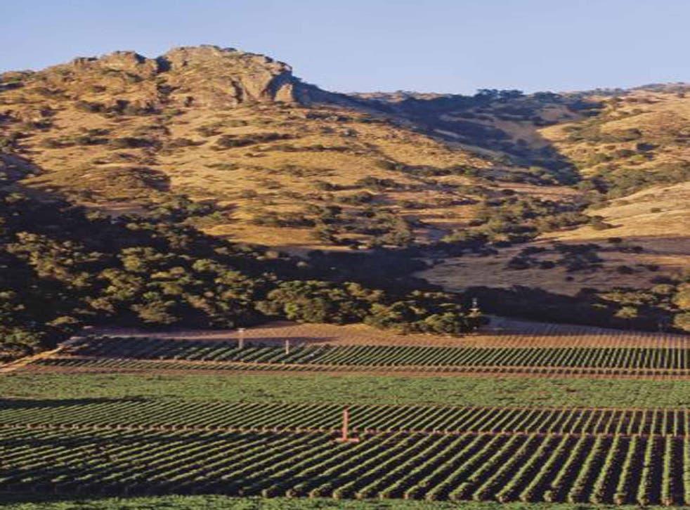 Grape escape: Stag's Leap Vineyard, California