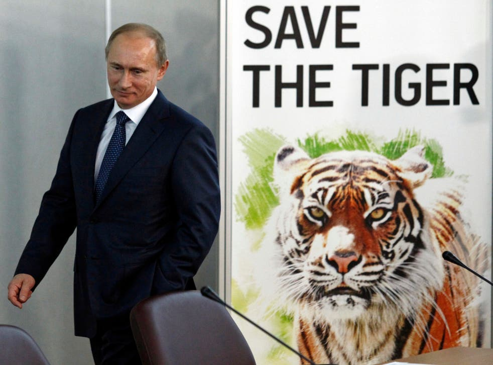 Putin, here at the International Tiger Forum in St Petersburg, Russia, in 2010, released three Siberian tigers into the wild in May 2014