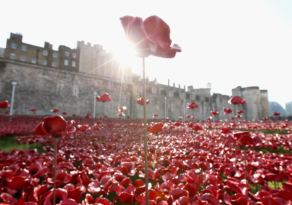 Image result for tower of london poppy