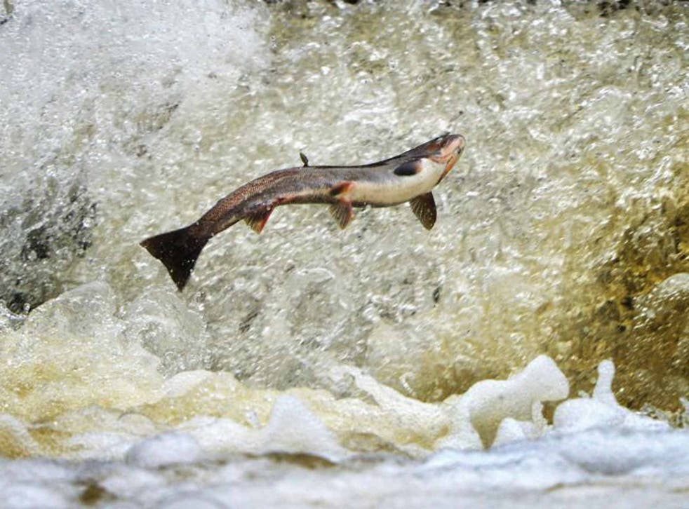 """""""Boom times"""" for the Norwegian aquaculture industry has pushed up the price of salmon"""