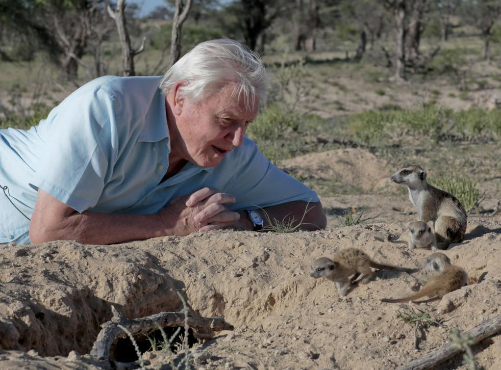 The 89-year-old wildlife presenter made the first series of Planet Earth in 2006