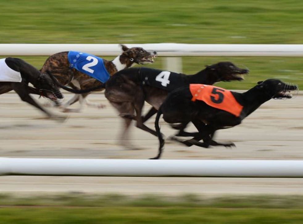 More than 7,000 greyhounds were registered to race last year