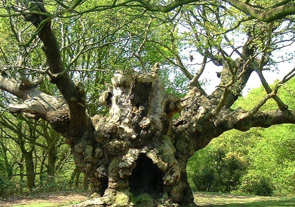 inke tree