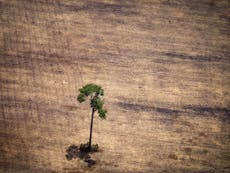 UK law will stop firms using products linked to illegal deforestation