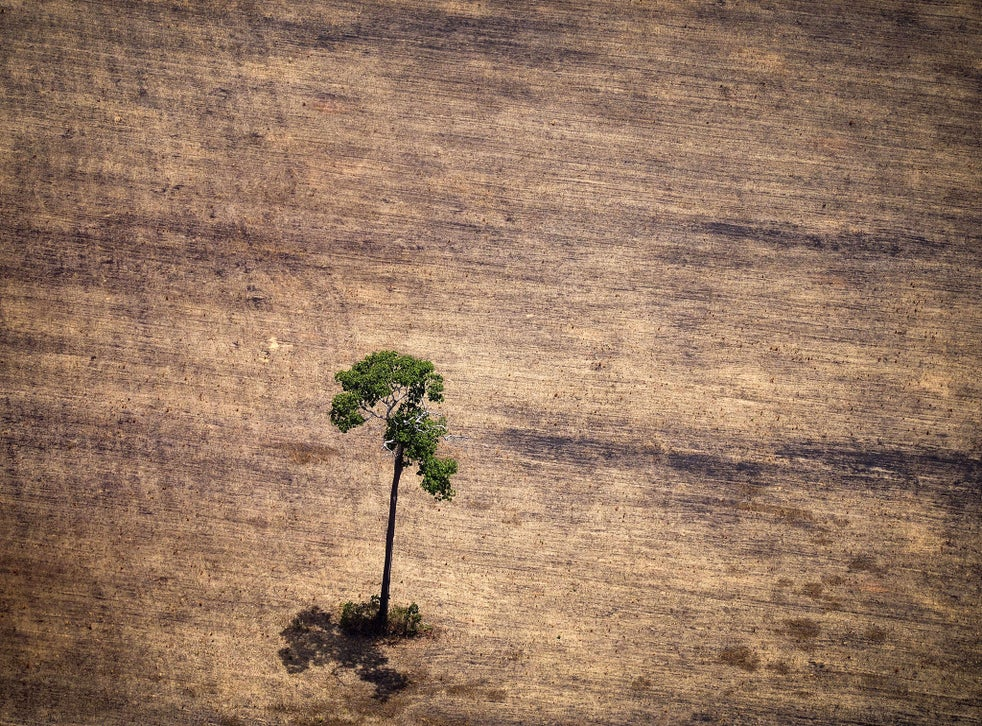 <p>Deforestation and land degradation is the second biggest source of emissions, says Lord Goldsmith</p>