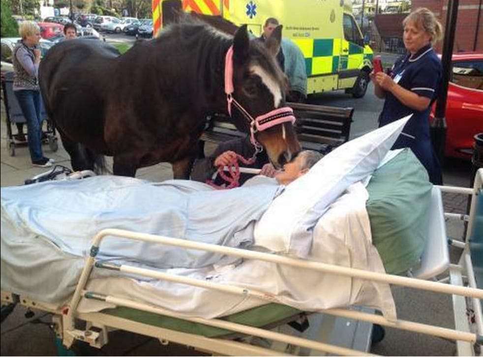 A photo of Sheila Marsh saying goodbye to her horse was released by the hospital trust
