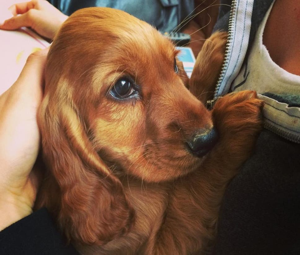 so cute i could eat it: the science behind 'cute aggression' | the