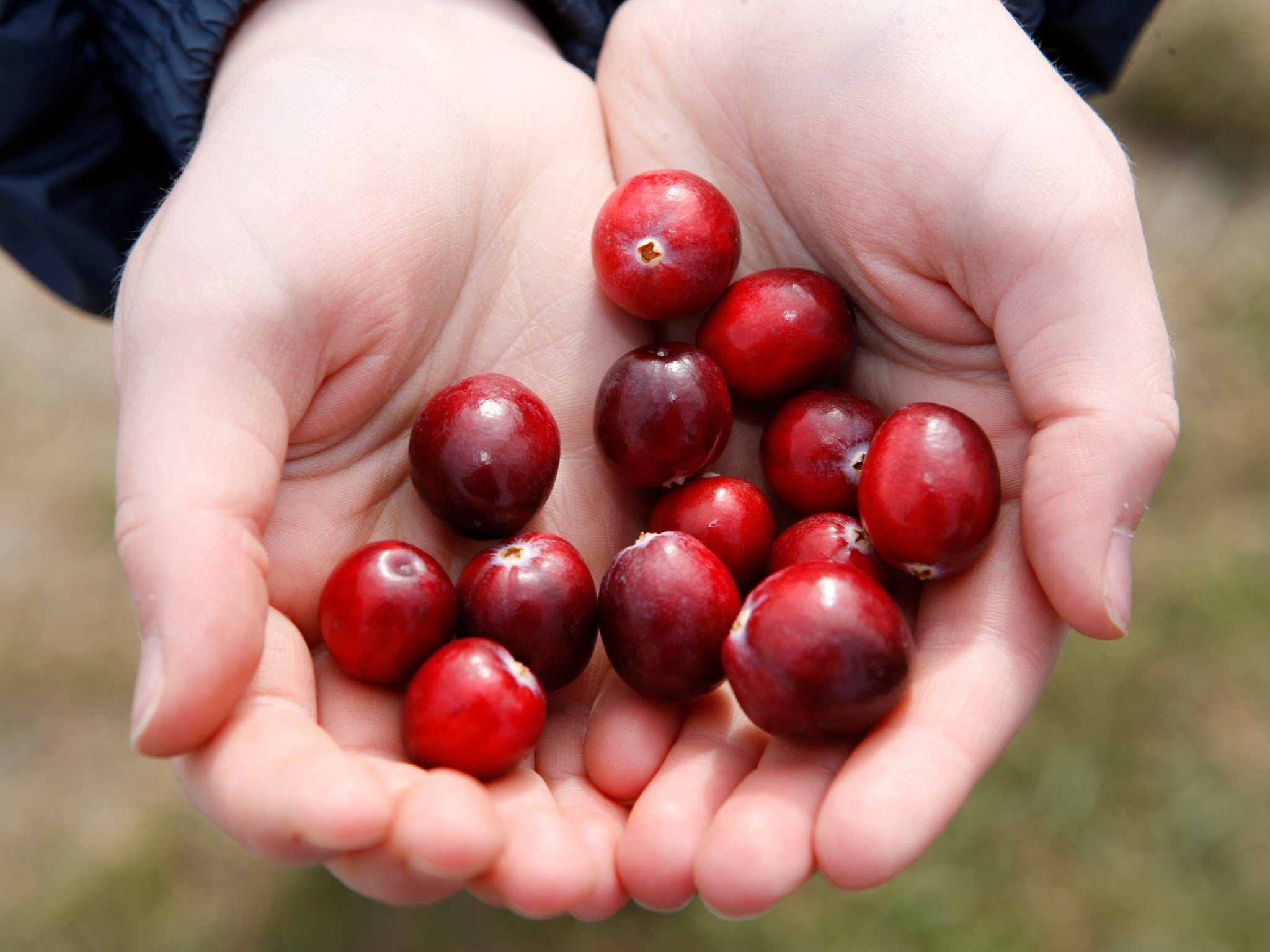 With Thanksgiving and Christmas giving cranberries their