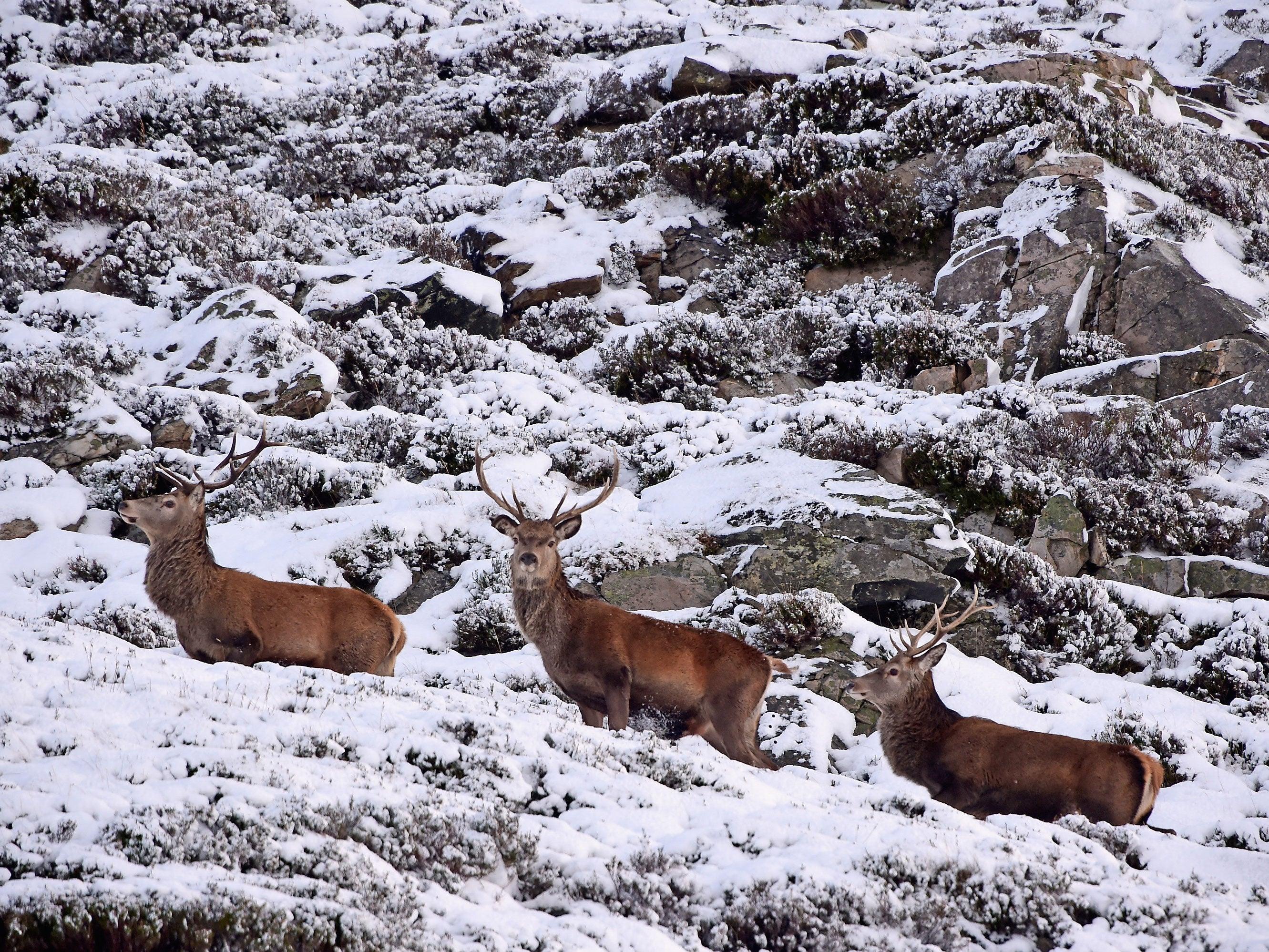 England Christmas Snow.White Christmas Will It Snow Where You Live On Christmas