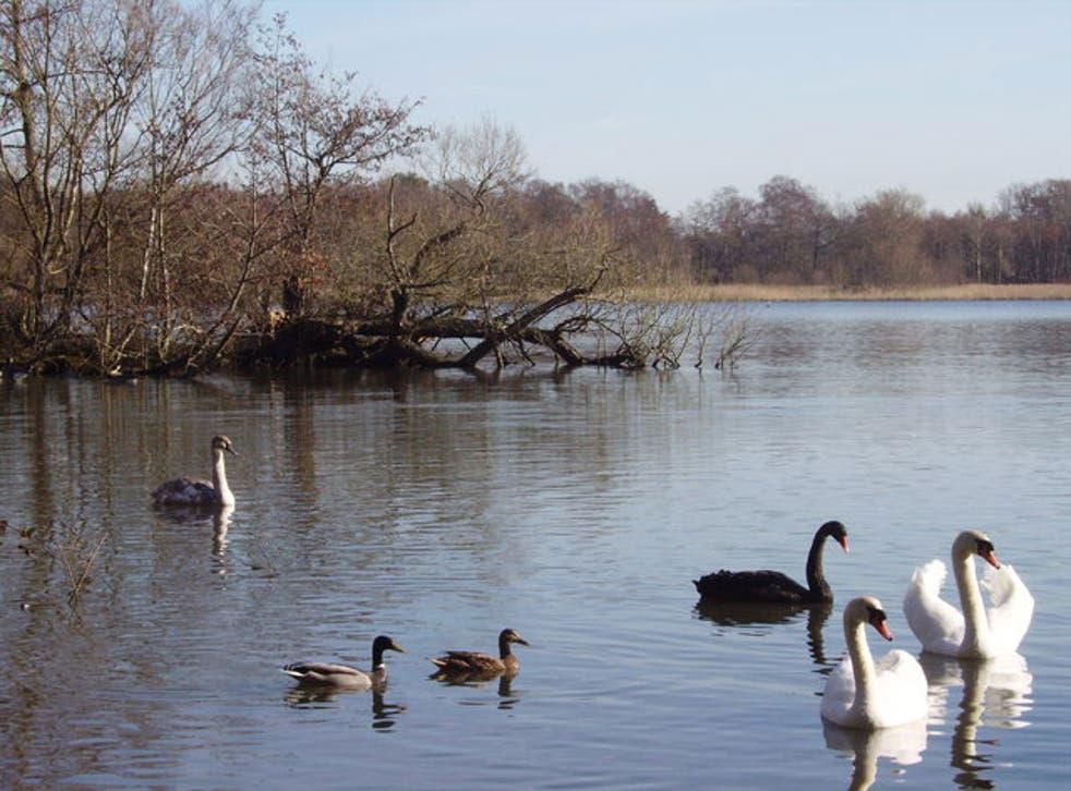 Fleet pond in Hart, Hampshire