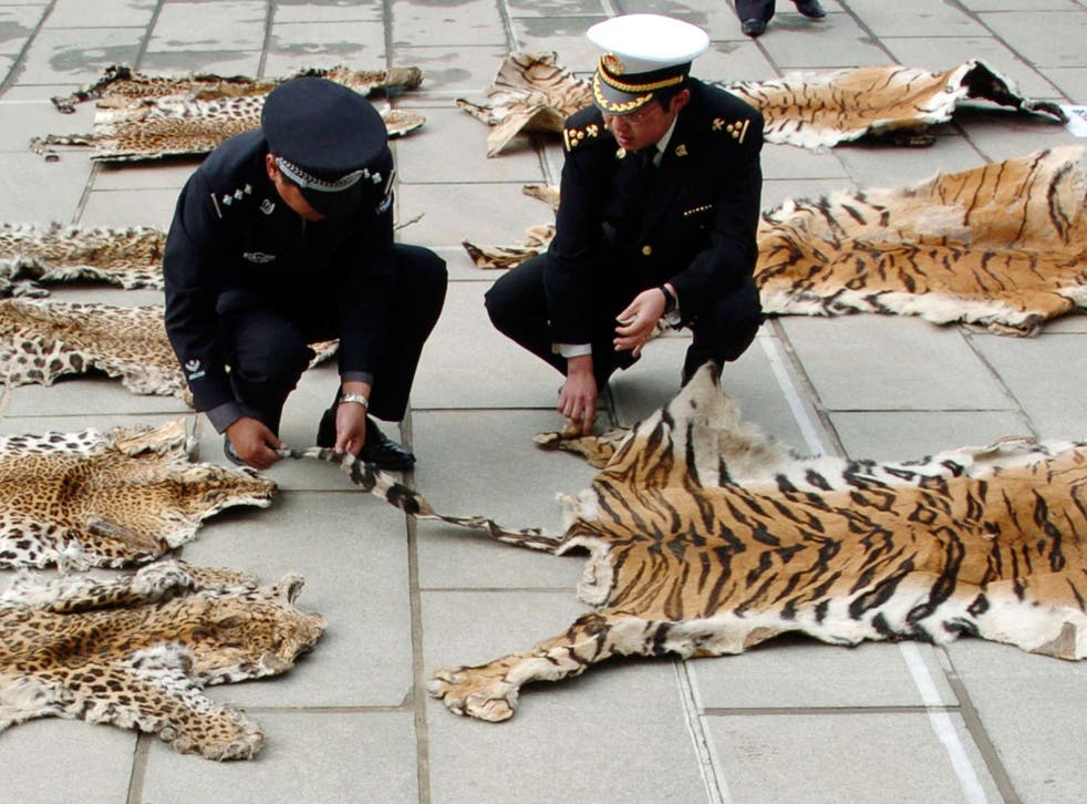 File: Chinese officials inspect a piece of tiger skin on June 14, 2005 in Lhasa of Tibet Autonomous Region, China