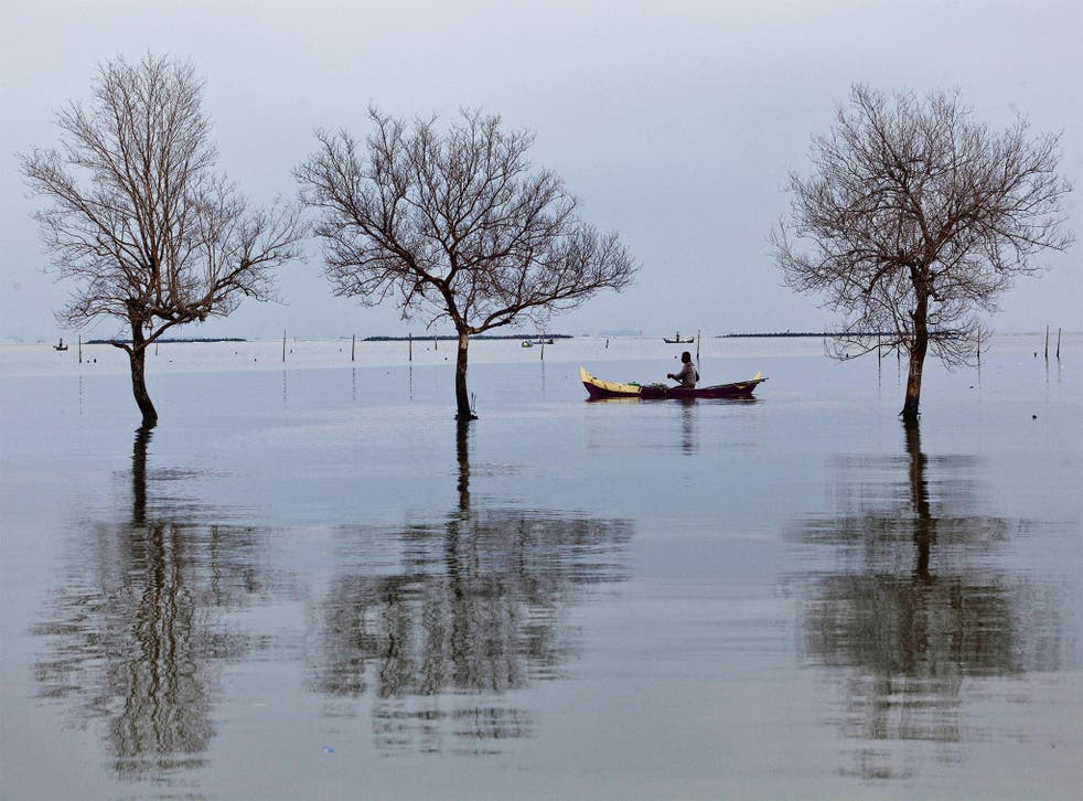 A fisherman passes near dead trees standing in flood waters from rising sea levels in Bedono, Indonesia. Sea levels are thought to be rising more quickly than originally predicted