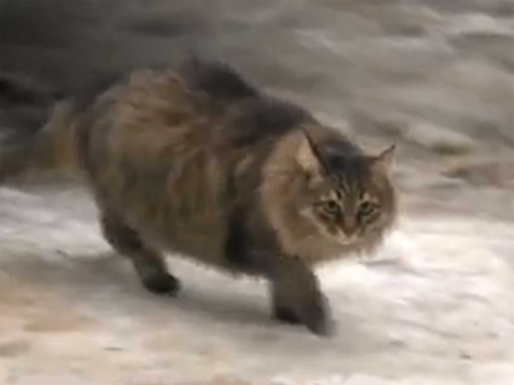 Russian Cat Called Masha Saves Baby Abandoned In The Cold The Independent The Independent