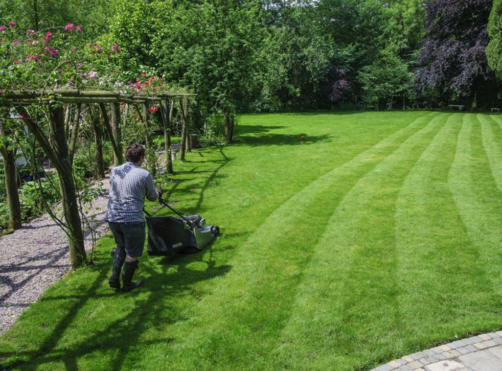 Once the energy expended by mowing, fertiliser use and watering are taken into account, lawns actually produce more greenhouse gases than they soak up (Rex)