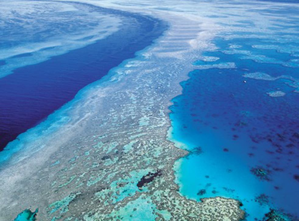 The Great Barrier Reef was about to be put on a UN danger list (AP)