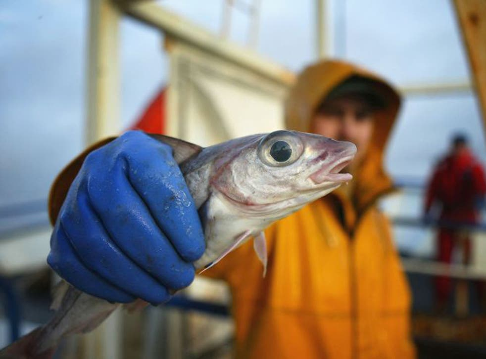 Fishermen operating vessels less than 10 metres long are only allocated 4 per cent of the UK's fishing quota (Getty)