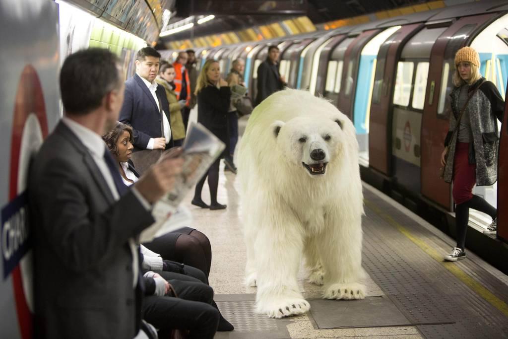 A Polar Bear On The Tube This Isn T Magic It S Sacrilege