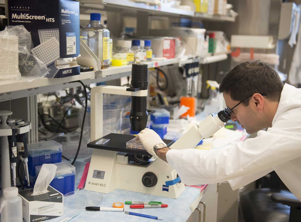 A scientist works in his lab: Could antibiotics offer a cure for cancer? (stock photo)