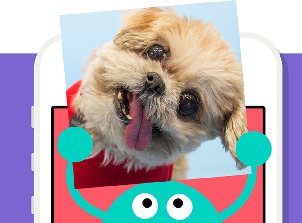 One of the characters from Vine's new app holds up a picture of online star Marnie the Dog