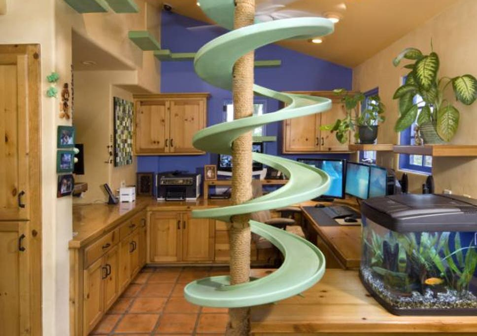Man spends 20 years creating the ultimate house for cats | The ... on house designs contemporary, house designs before and after, house designs green, house designs diy, house designs living room, house designs decor, house designs vintage, house designs furniture, house designs kitchen, house designs bedroom, house designs bathroom, house designs office, house designs modern, house designs wallpaper, house designs vacation,