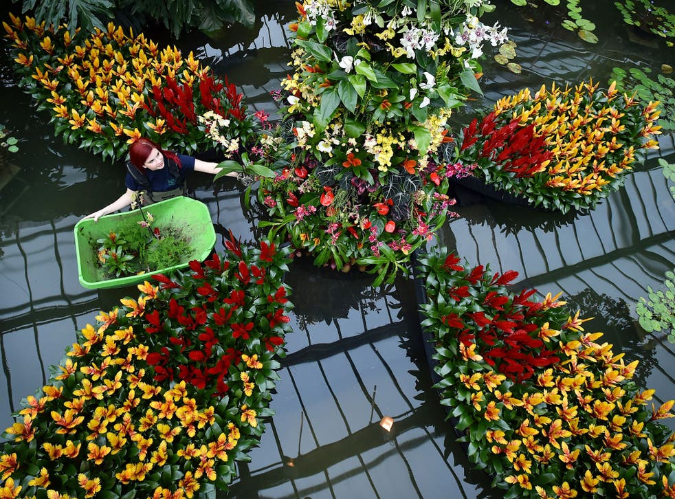 An employee arranges Bromeliaceae ahead of the 2015 'Orchids Festival' at the Royal Botanic Gardens in Kew, west of London