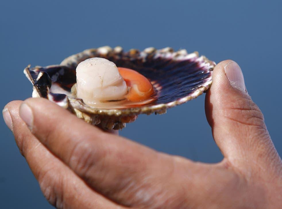 Flavour factor: scallops have 'kokumi' in abundance