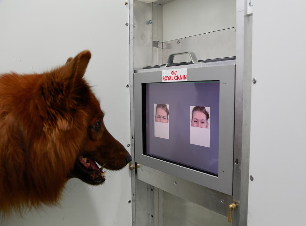 Dogs can tell different human facial expressions