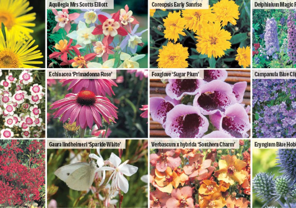Win A Spectacular Perennials Collection The Independent