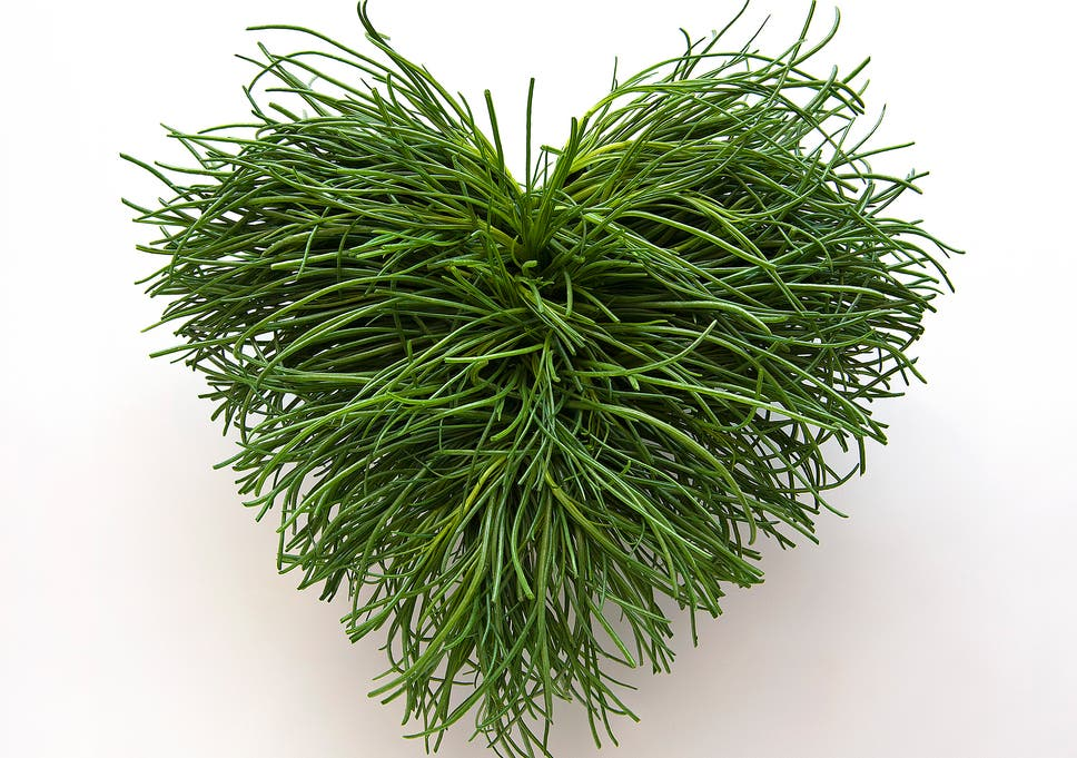 Image result for agretti