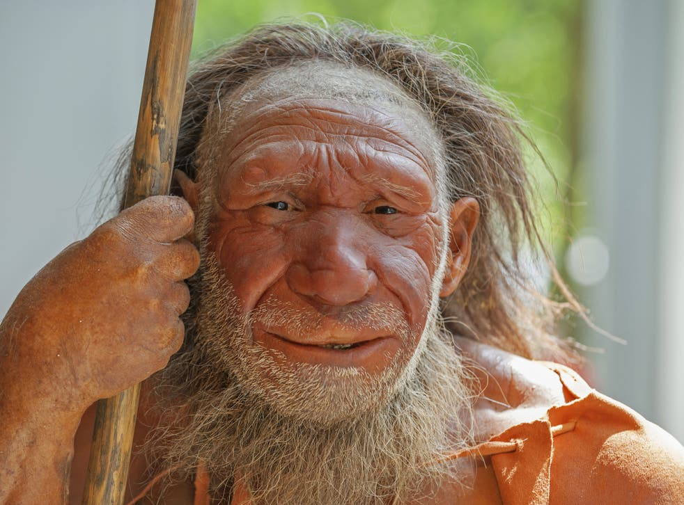 Model of a Neanderthal man