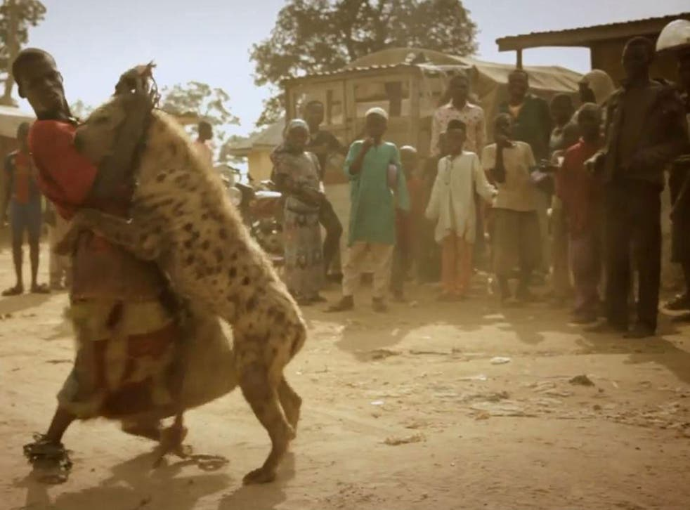 One of the 'hyena boys' in a show in Nigeria. Picture: Journeyman Pictures