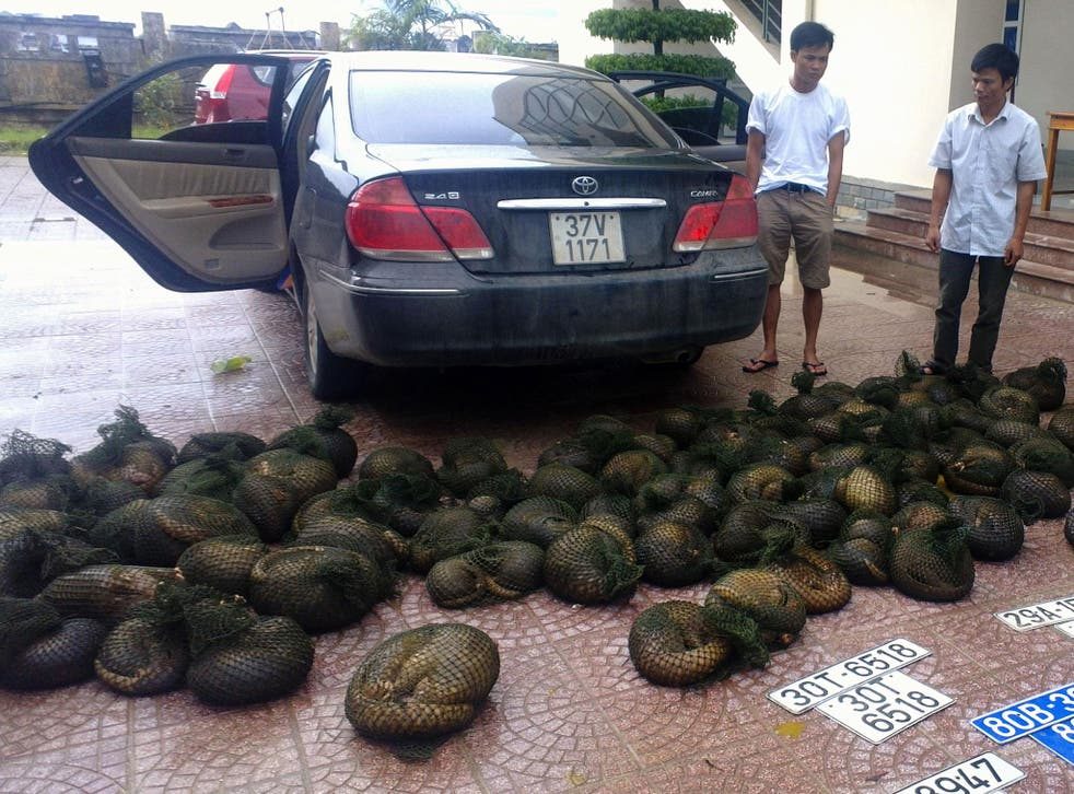 Two suspected wildlife smugglers caught with pangolins in Vietnam