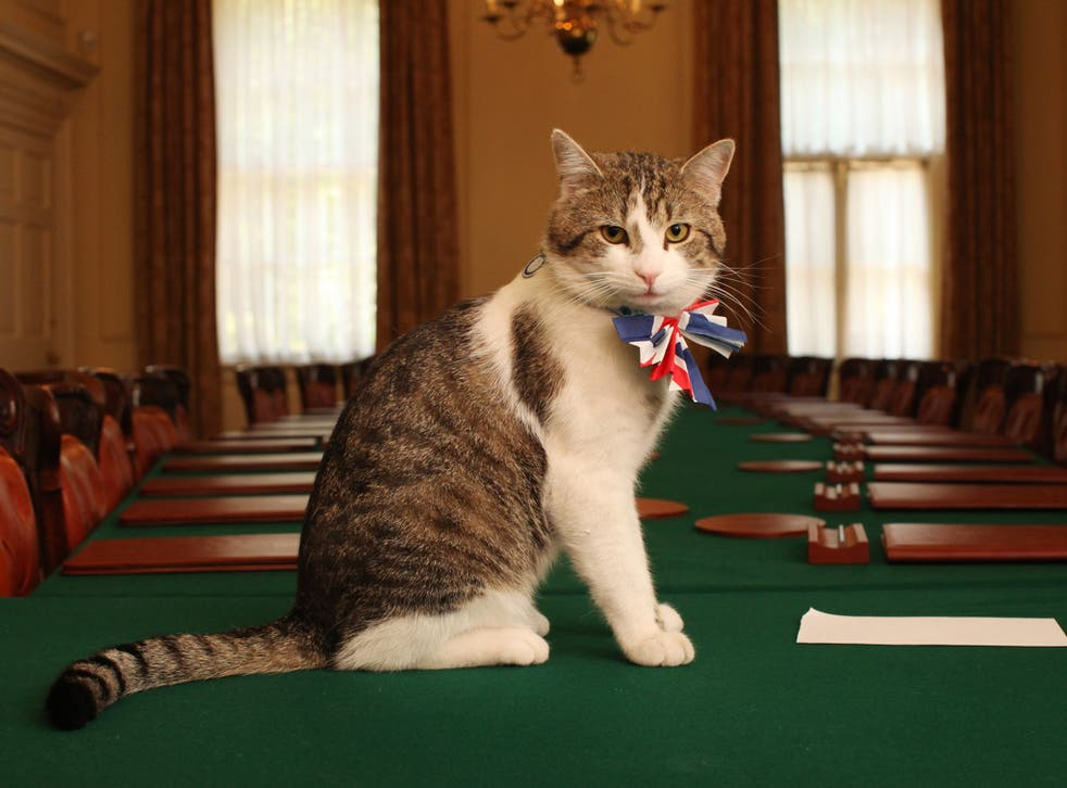 Larry, the Downing Street cat.