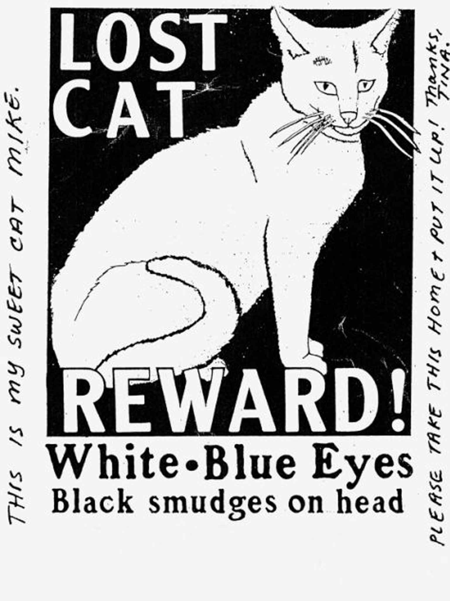 Every Missing Pet Poster Tells Story >> Lost Pets Posters The Photocopied Picture Of A Much Missed