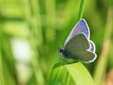 Wings of desire: Why the hobby of Butterfly collecting is over