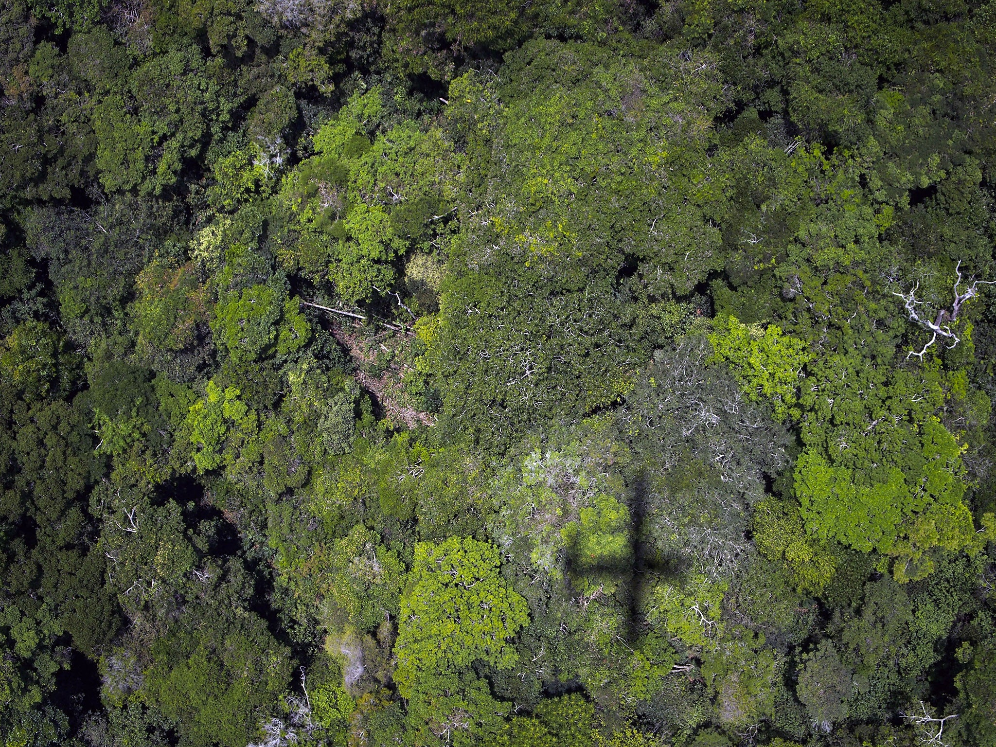 Amazon rainforest losing capacity to fight climate change as trees die