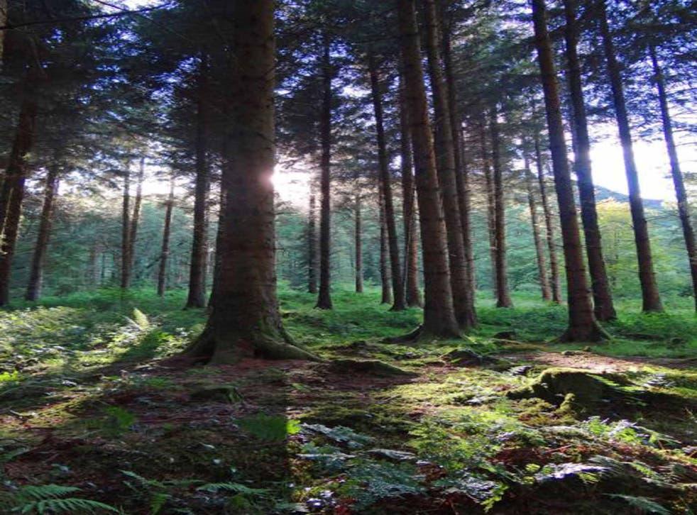 Brechfa Forest, Carmarthenshire