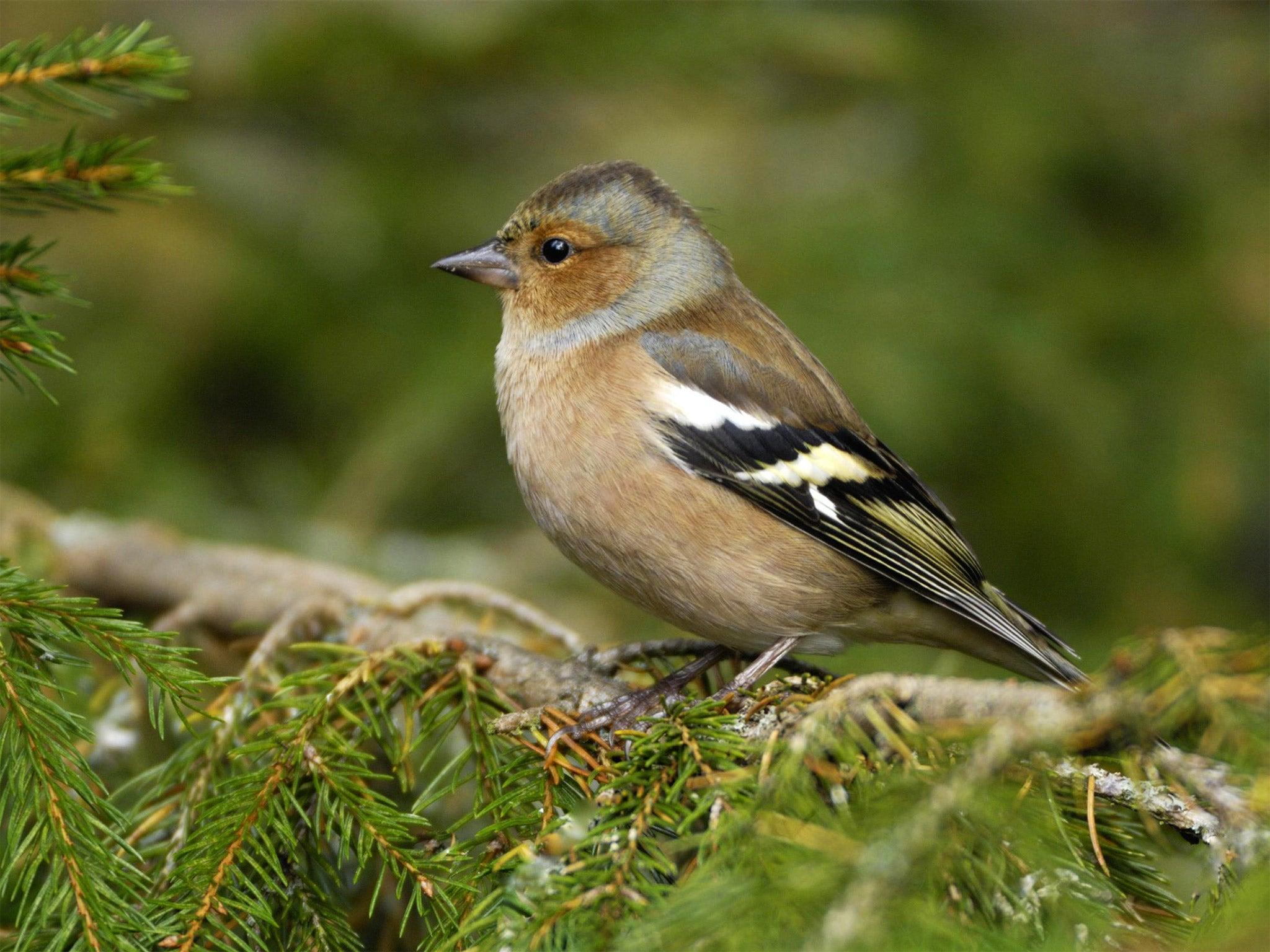 Big Garden Birdwatch An Abundance Of Garden Birds But