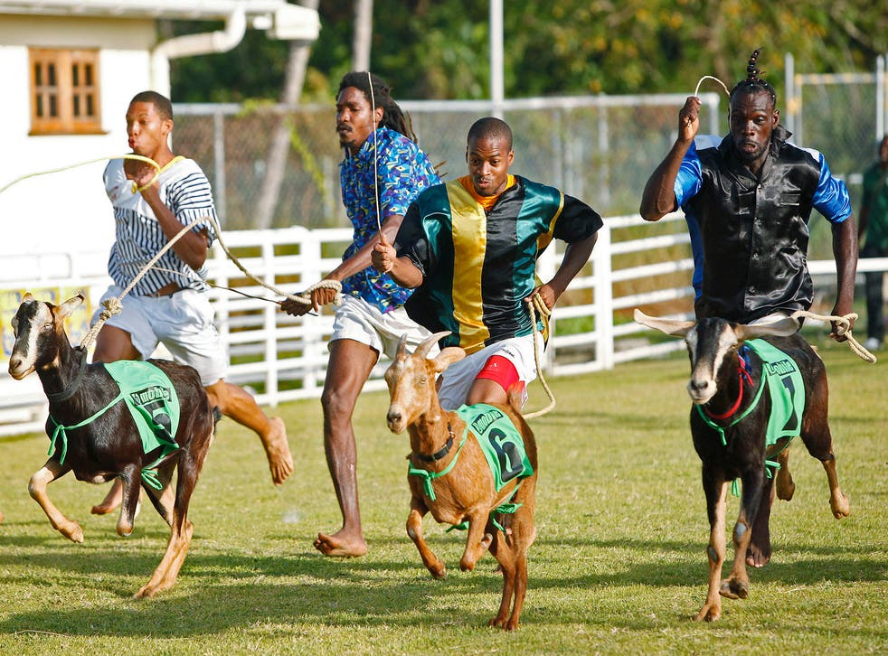 Win-win situation: goat handlers, also known as 'jockeys', race for the finish line