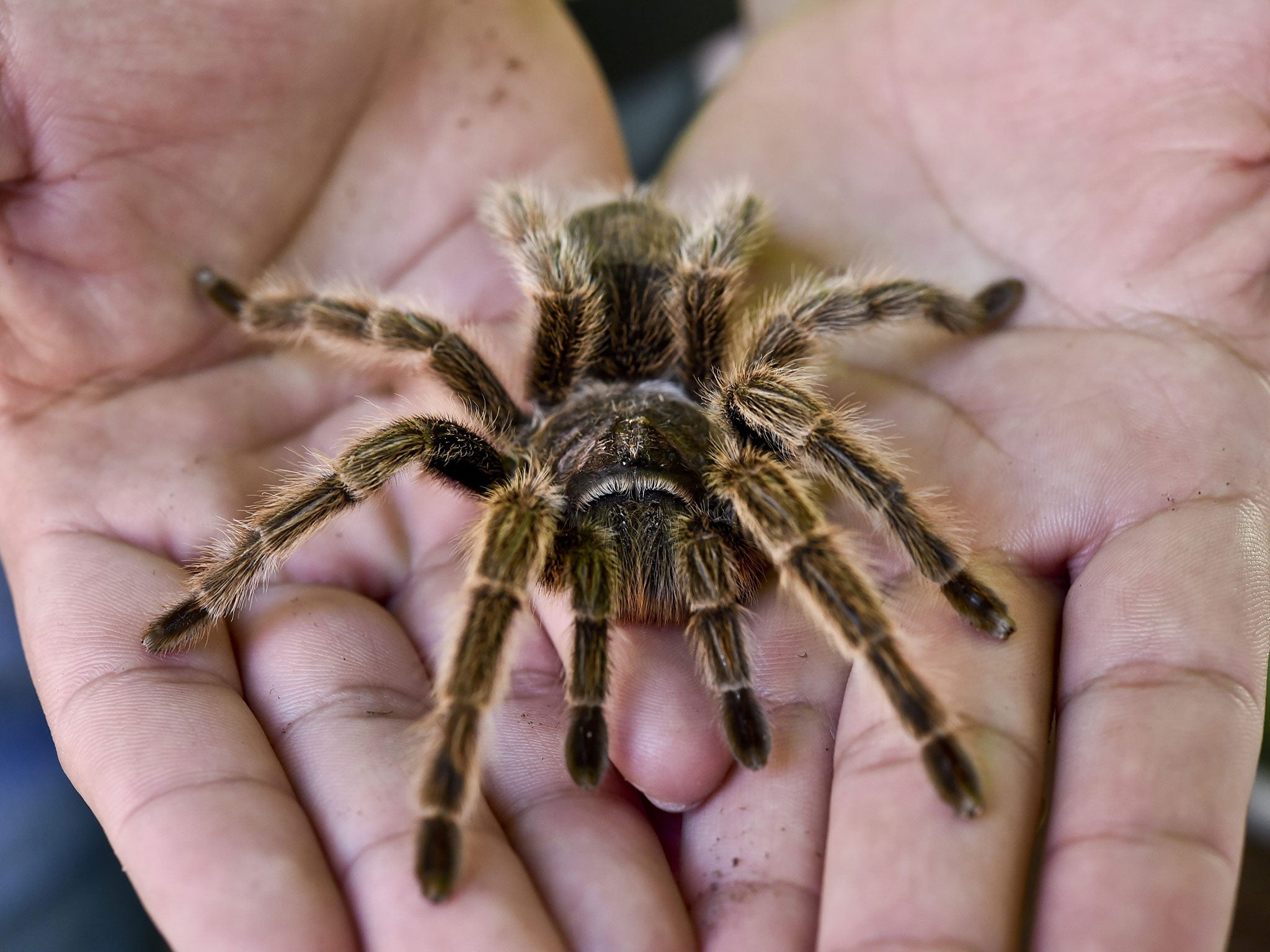 Fear of spiders became part of our DNA during evolution, say scientists