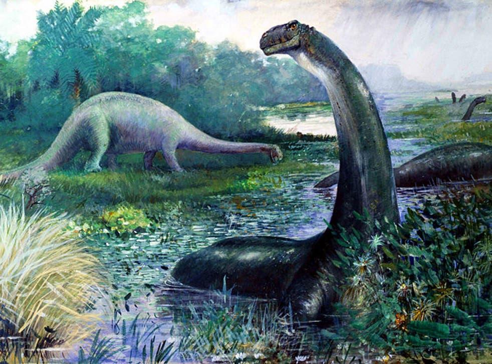 The Brontosaurus, now officially a dinosaur species again