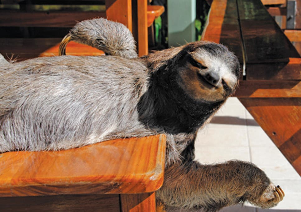c253859958559 American Apparel's latest campaign star is a furry three-toed sloth ...