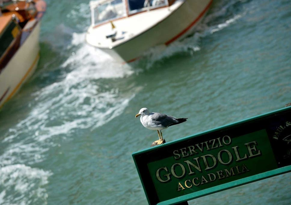 Venice declares war on the seagulls attacking tourists and