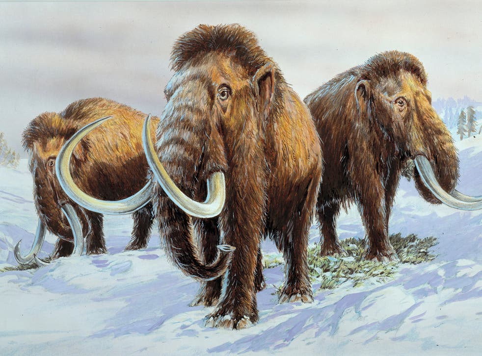 Back from the dead? The woolly mammoth