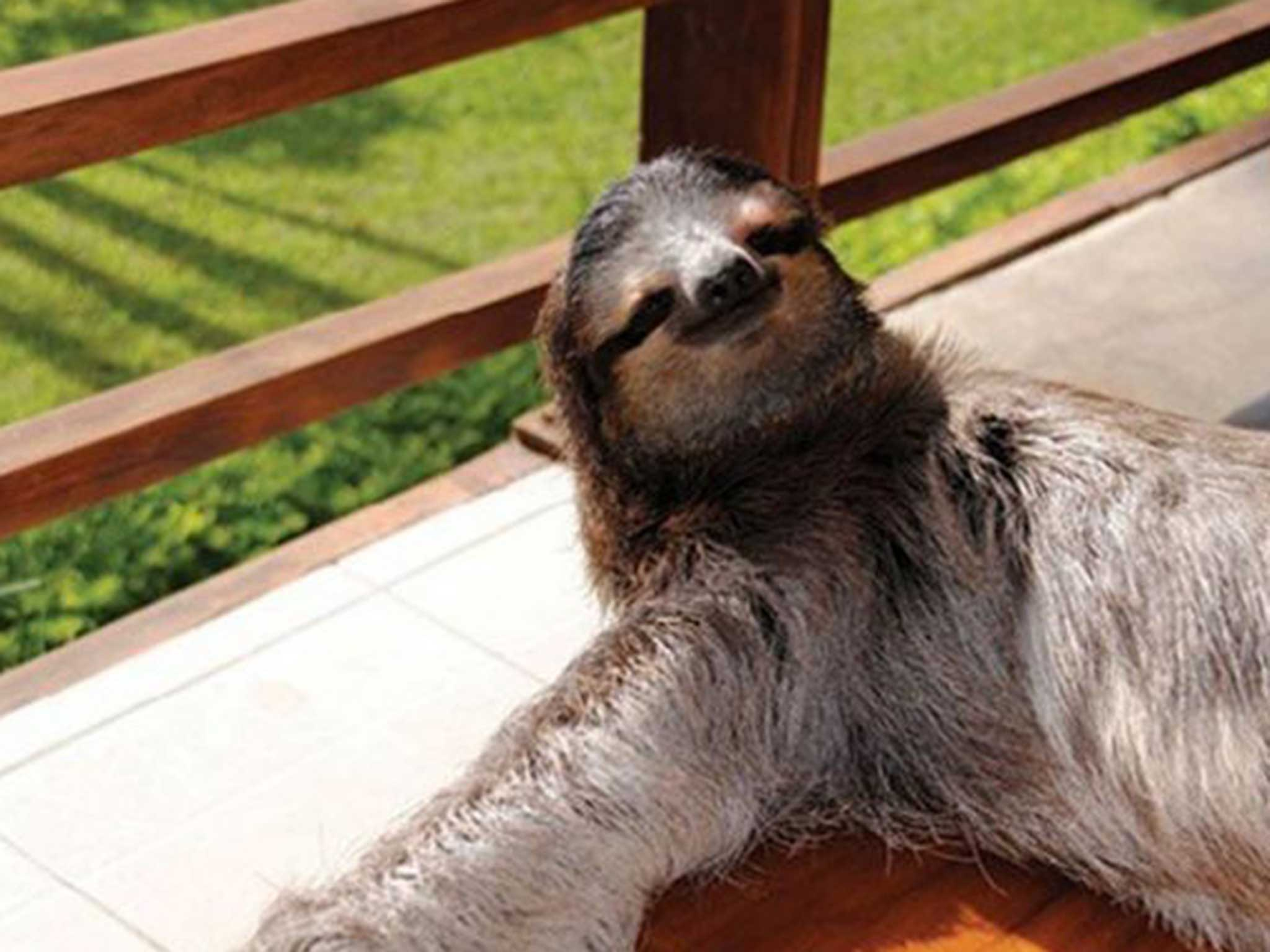 The sloth is now the face (and furry body) of three big